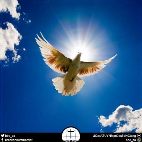 Peace Bru (Mark 9:49–50)