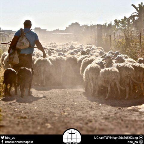 Shepherd the Flock (1 Peter 5:1–5)