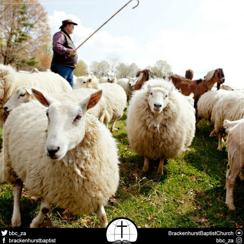 The Good Shepherd (Mark 6:30–44)