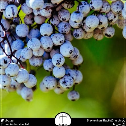 Fruitful Prayer (John 15:16)