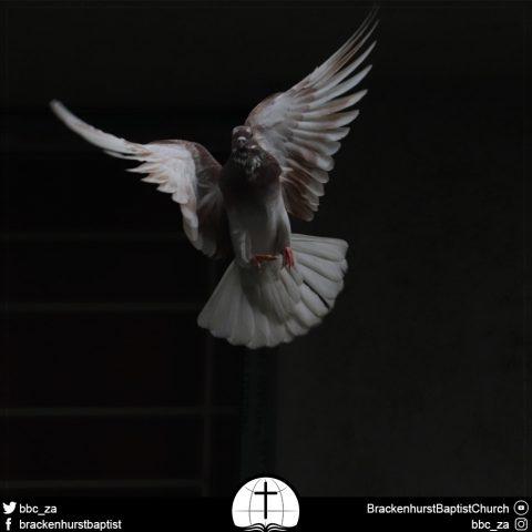 Pentecost Sunday (Acts 2:1–47)