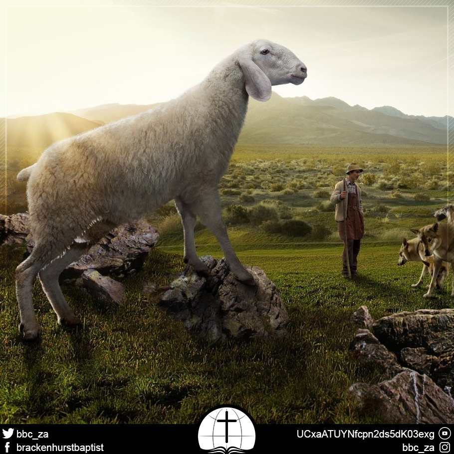An Ancient Christmas: The Shepherd