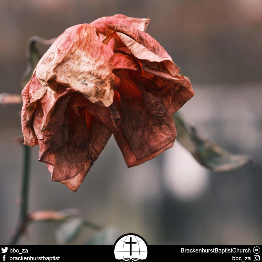 Dealing with Death (Numbers 19:1–22)