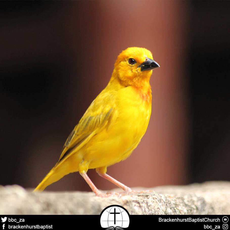 Canaries in a Coal Mine