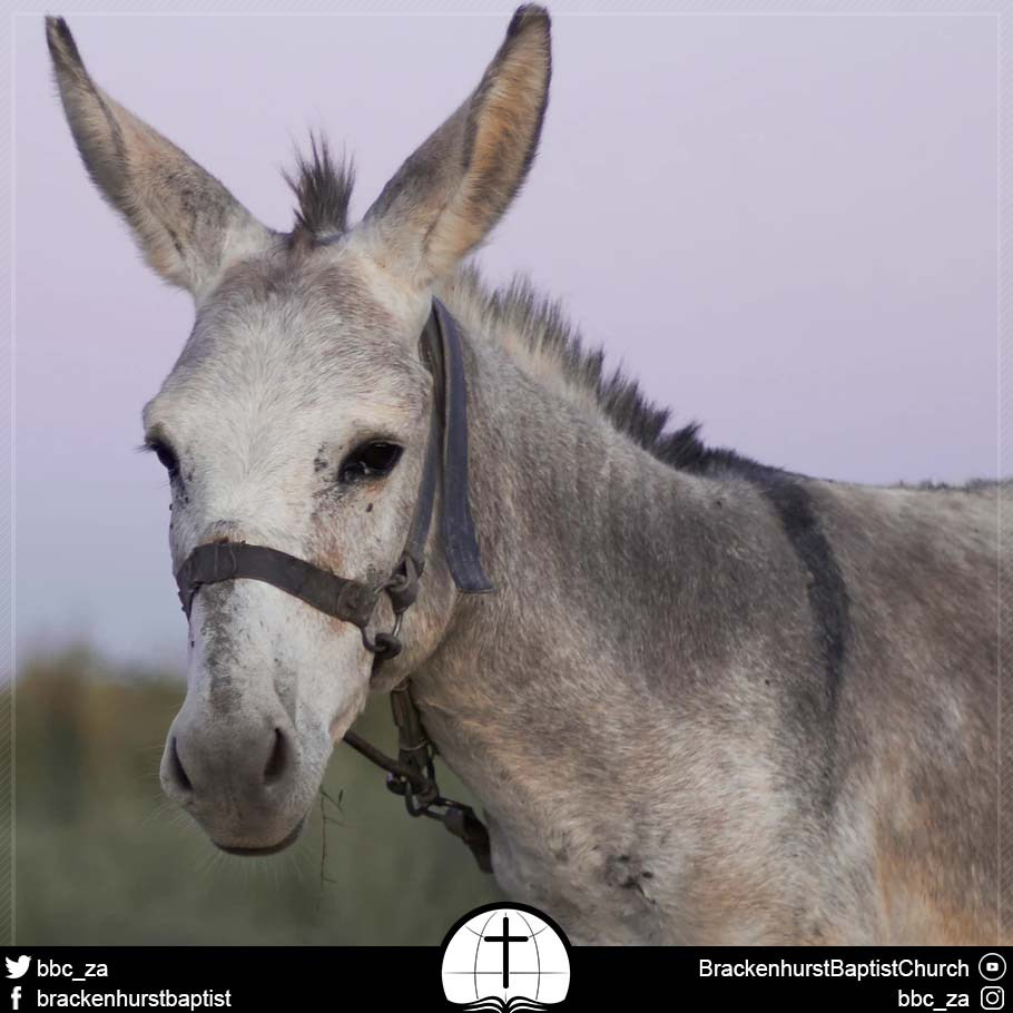 The Sangoma and His Donkey (Numbers 22:1–41)